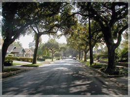 Bungalow Heaven Oak Tree Lined Street