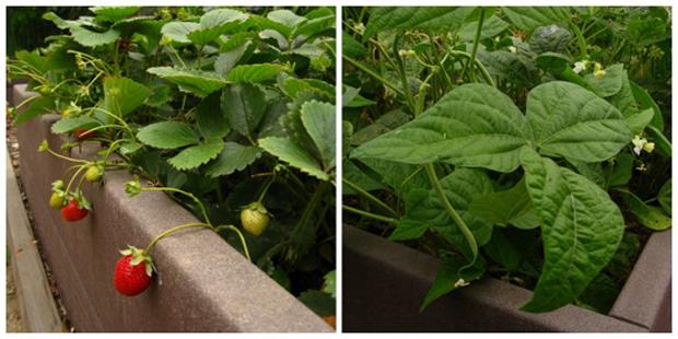edible garden image
