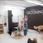 North Fair Oaks - Dog Grooming