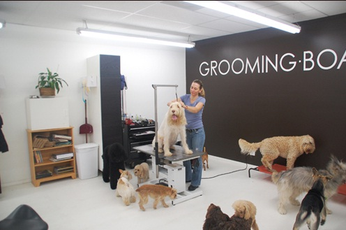Awesome Dog Grooming Shop Design Ideas Images - Decorating ...