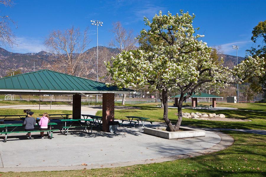 Image of a picnic shelter at Victory Park