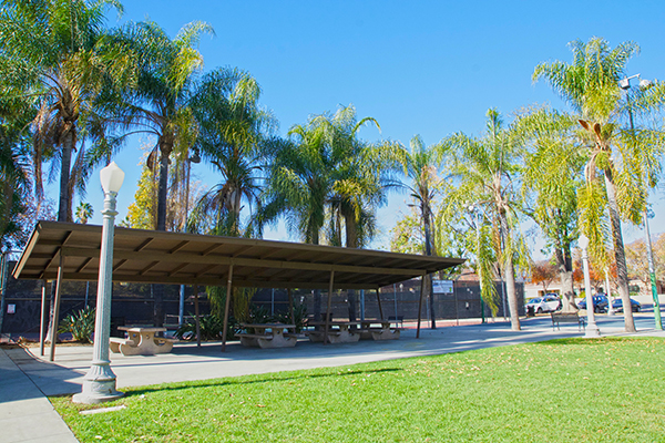 Image of Palm trees and picnic shelter at Eaton Blache Park