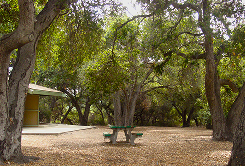 Image of picnic area at Hahamongna Watershed Park