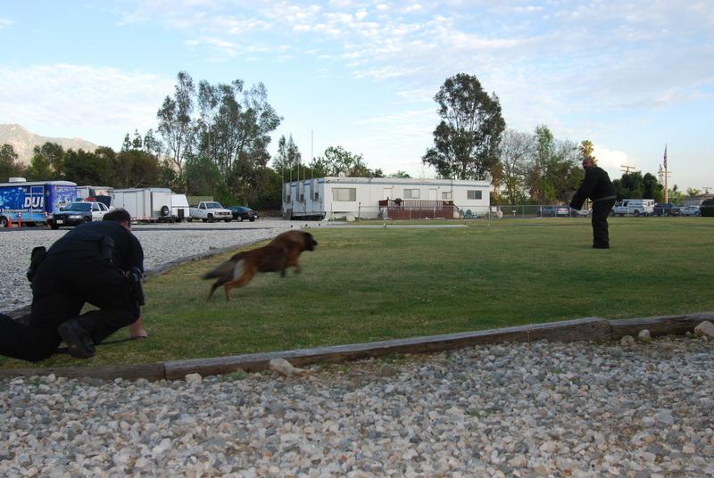 k9 officer in training