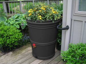 Grey rain barrel with flowers on top.