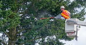utility worker Tree Trimming in a bucket