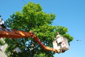 Utility male worker on a bucket trimming trees