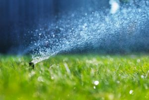 A sprinkler head spraying water on a fresh green lawn.