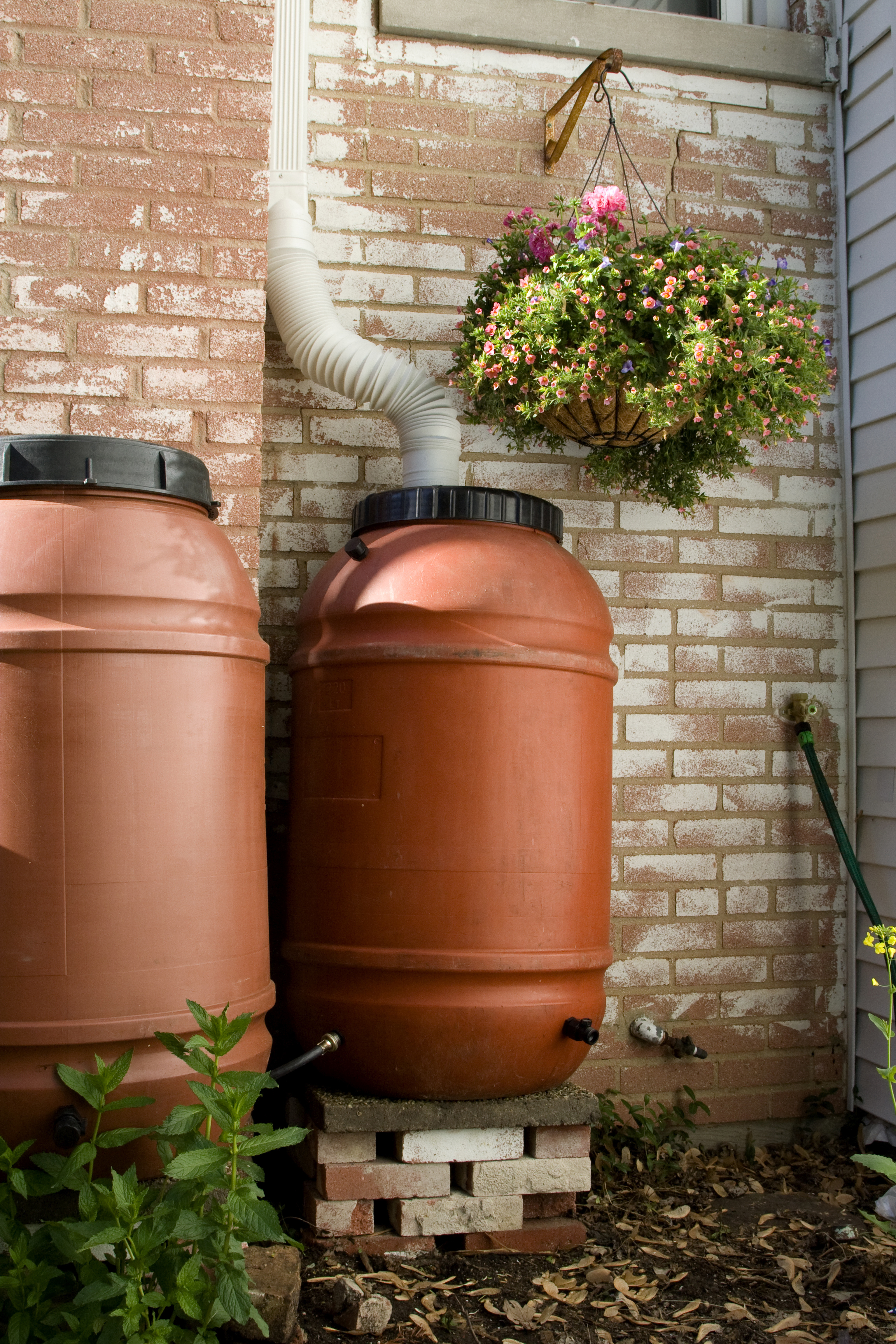 Two linked rain barrels. The rain water collected in these barrels is sufficient to water a small garden
