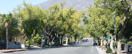 Tree lined street image link to residents information page